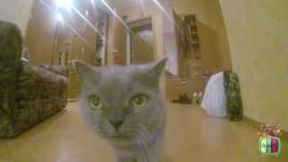 Pets. Кошка гуляет по дому