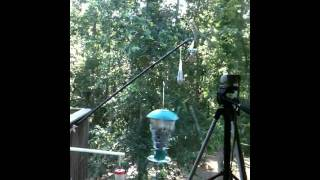 Squirrel vs. electronic Feeder #1