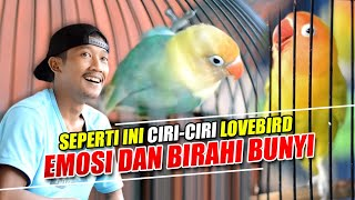 Download lagu CIRI-CIRI LOVEBIRD EMOSI DAN BIRAHI BUNYI