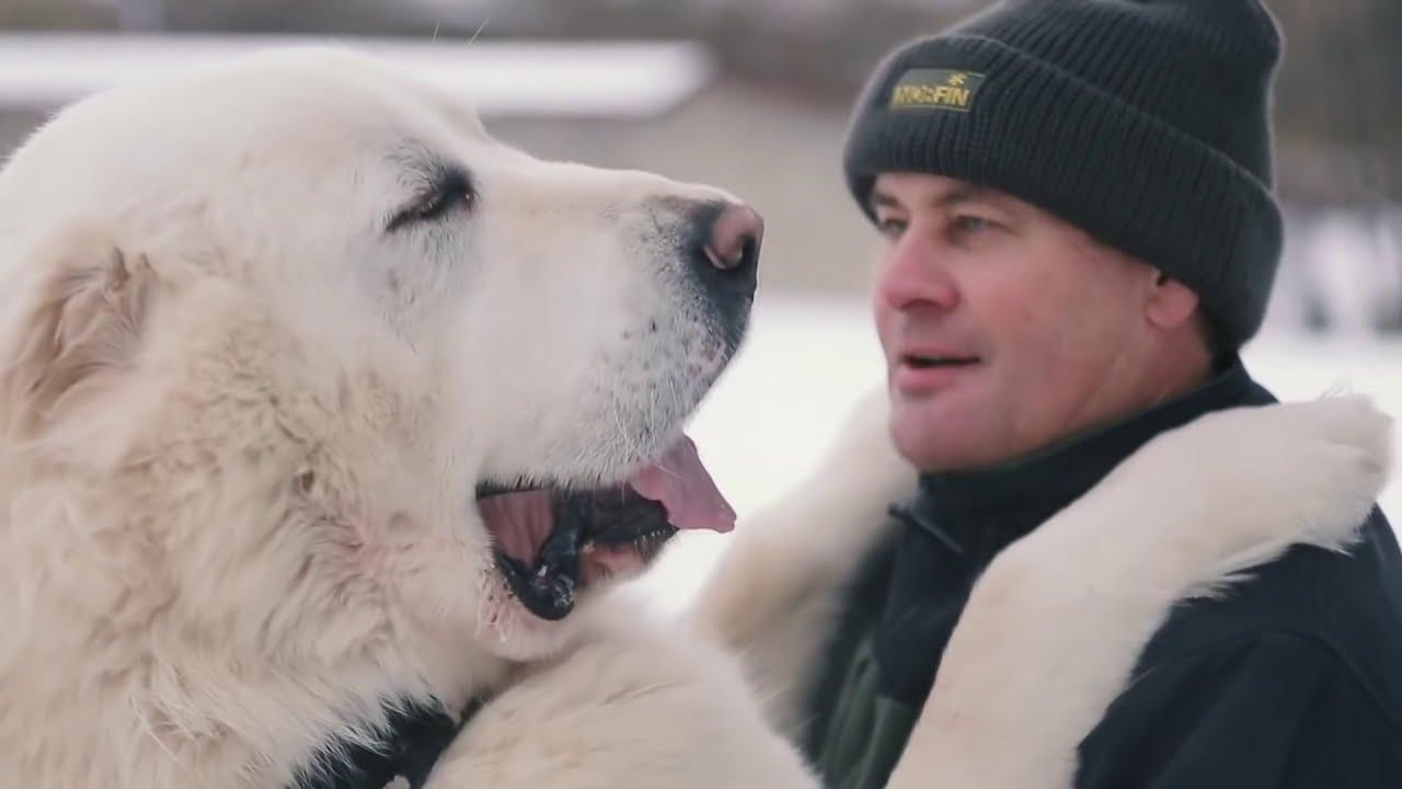 Самые Большие Собаки в Мире/Топ 10
