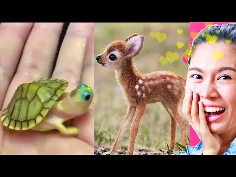 รวมคลิปสัตว์โลกตัวเล็ก สุดน่ารัก ที่ดูเเล้วคุณจะยิ้มไม่หุบ