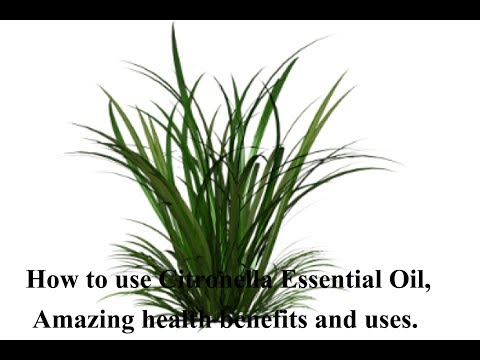 how-to-use-citronella-essential-oil,-amazing-health-benefits-and-uses