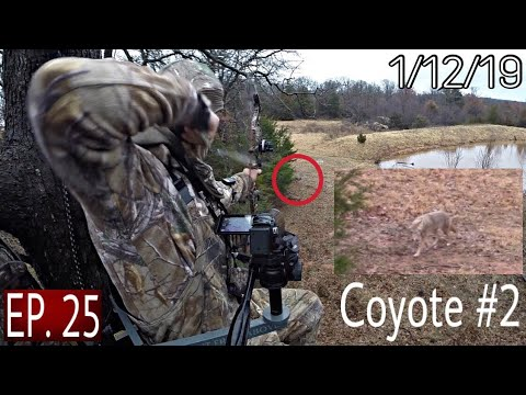 Coyote With A Bow 20 YARDS! Went WRONG!