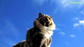 Ballada o trzech kotach wersja 2