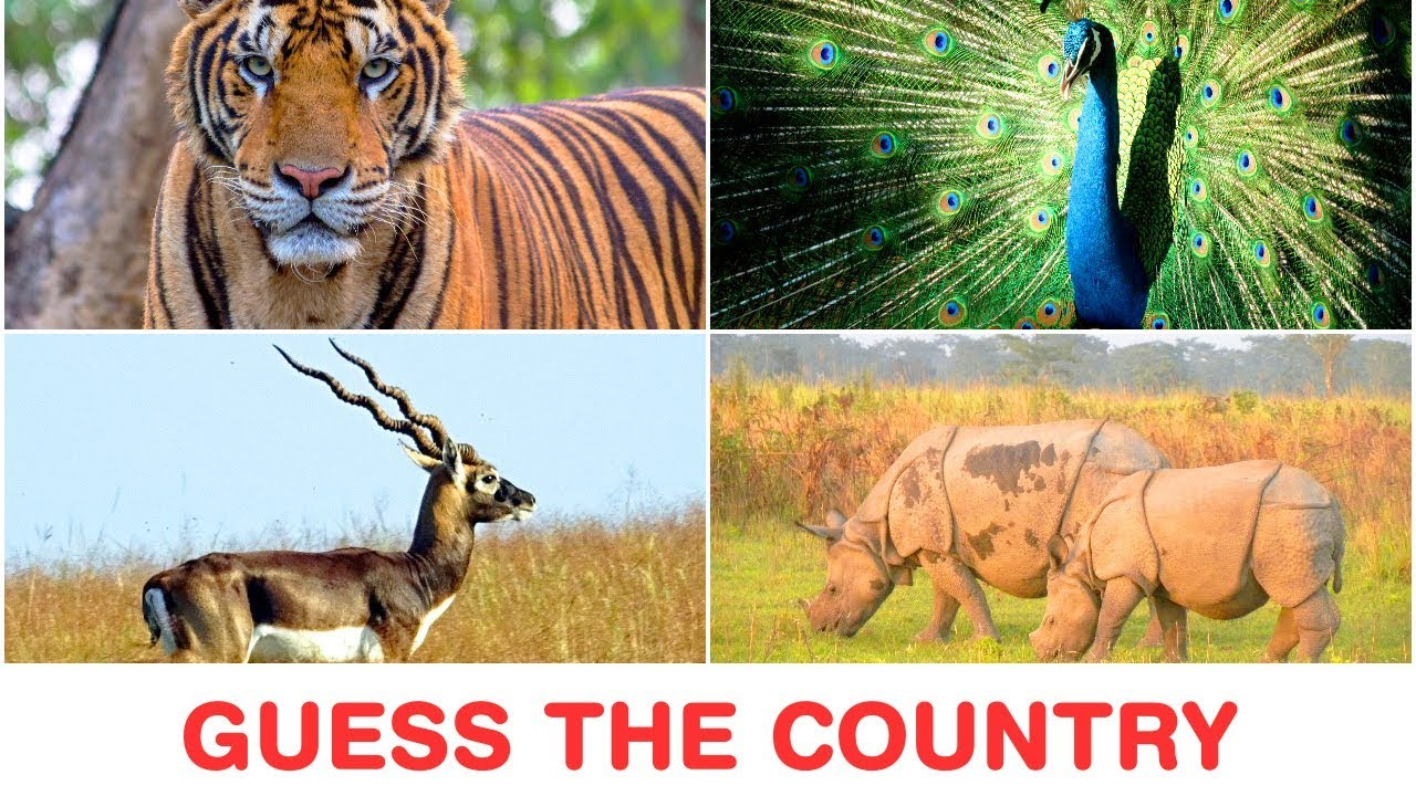 Can You Guess the Country from its Wild Animals? 18 Country Quiz Questions