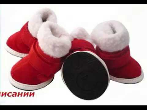 обувь для собак фото