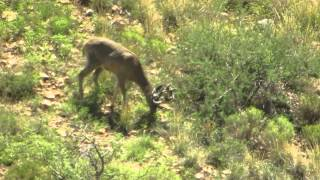 porcupine hunting videos