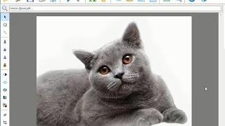 Как сделать белый фон на фото за пару минут?