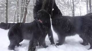 My funny dogs in the snow