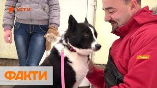 Реабилитолог для детей, больных и пожилых людей: собака-визитер во Львове