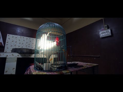 കോഴികൾ ഇല്ലാത്ത ഭൂമി | KOZHIKAL ILLATHA BHOOMI Award Winning Short Film By Vishal Viswanathan