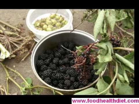 Organic Health Food, Nutrition Health