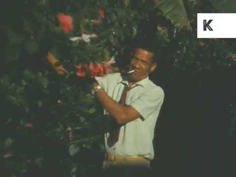 1950s, 1960s Caribbean Island Home Movies, Jamaica, Docks