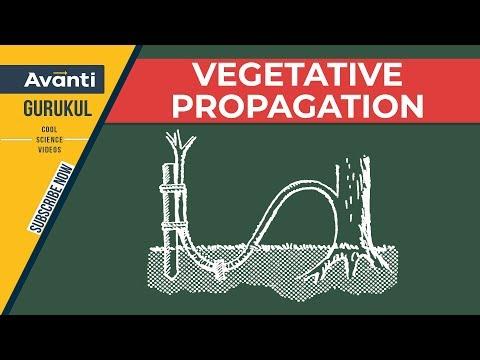 B23.1.3 Vegetative propagation (Hindi)