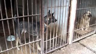 самара приют для бездомных животных участие