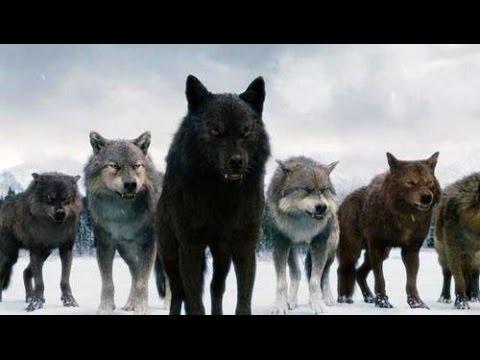 Картинка волка с надписью не важно кто напротив важно кто рядом