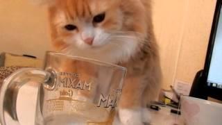 Наглый кот Тёма