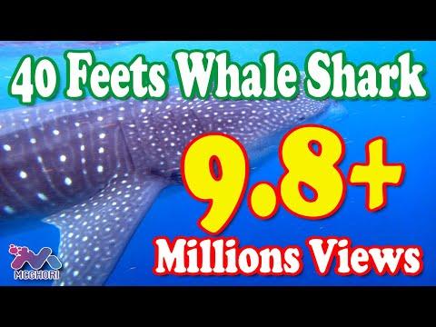 40-Feet Long Shark in Karachi Fish Harbour 07-02-2012