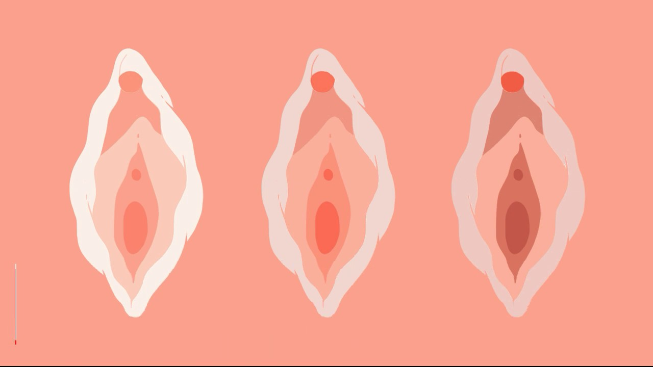 Different phases of the menstrual cycle