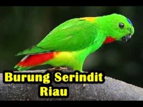 flora dan fauna Indonesia [dkwardhani]