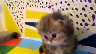 Милые котята учатся ходить!