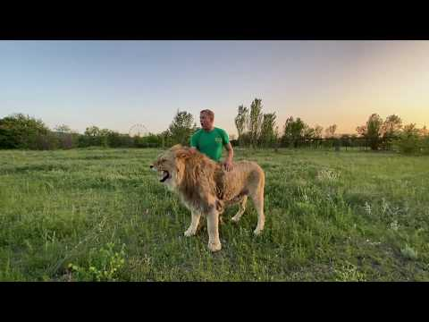 Видео ОБЯЗАТЕЛЬНОЕ К ПРОСМОТРУ ! Я помогаю льву Султану сражаться с ДЕСЯТКОМ ЛЬВОВ !  Lion man !