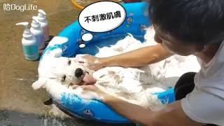 小羊洗澎澎,送嘎並軌  (水魔素贊助^^) thumbnail
