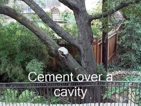 (15) Cement over cavity