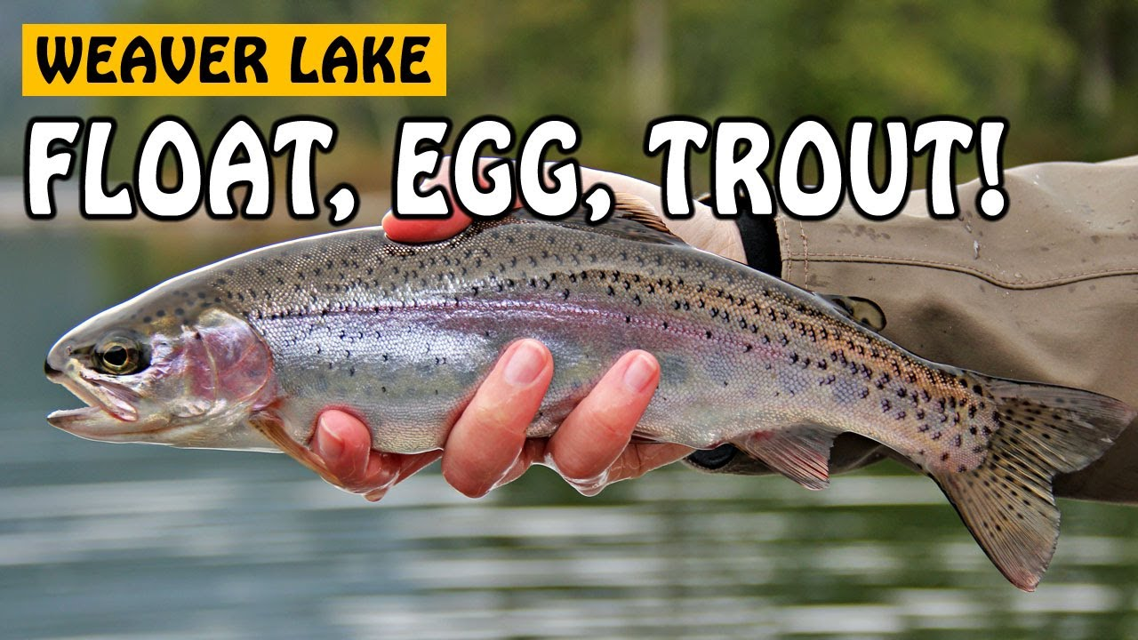 Float, Egg, Trout! | Fishing with Rod