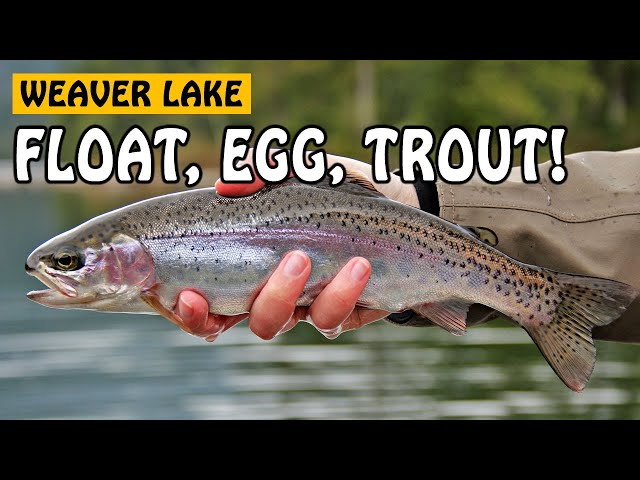 trout fishing: how to setup your rig to catch rainbow trout in, Fly Fishing Bait