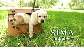SIMA by 田中美奈子.