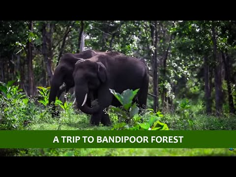 my photography trip to  bandipoor forest, karnataka india