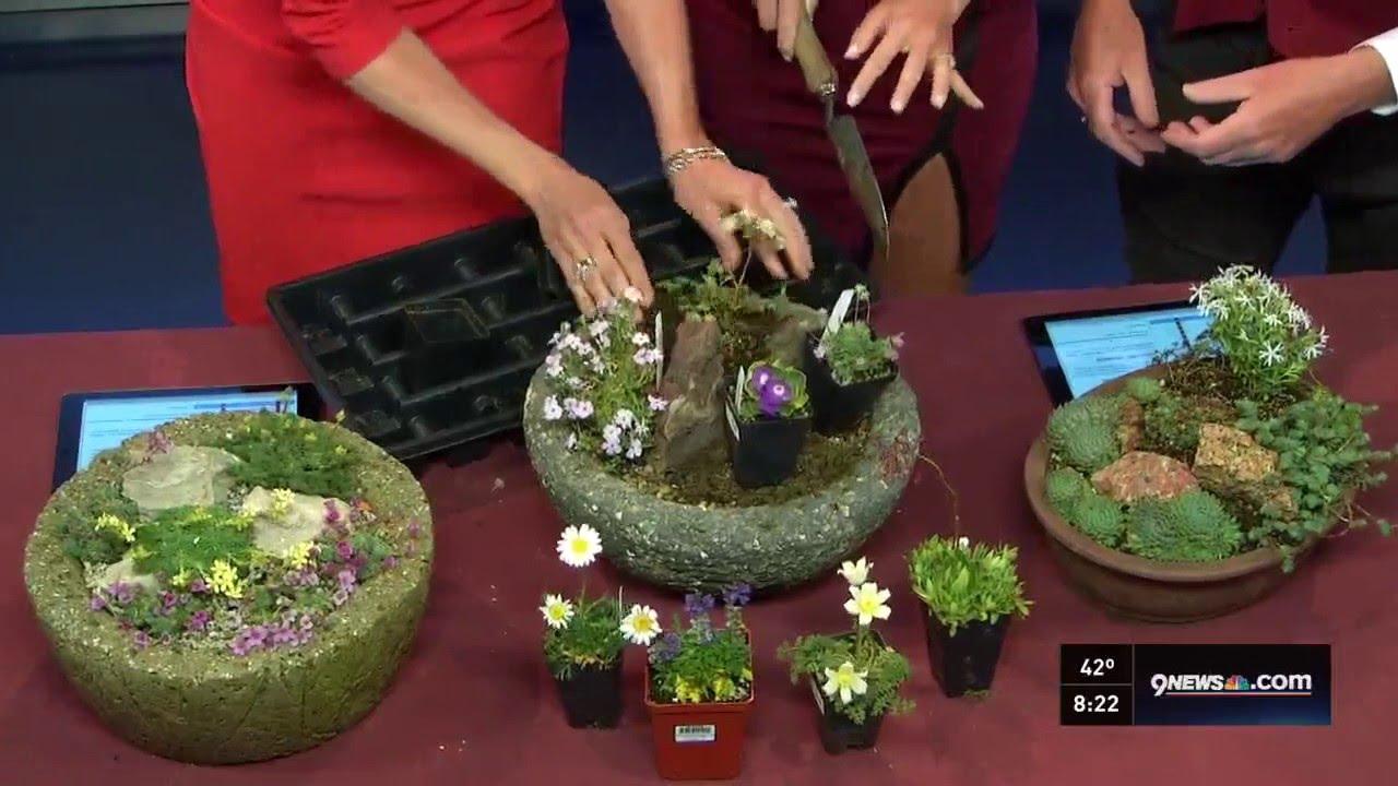 proctor growing alpine plants without a rock garden youtube. Black Bedroom Furniture Sets. Home Design Ideas