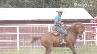 Horse Riding Training At Clearwater Horse Club