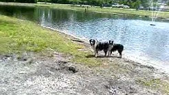 Paws dog Park / Davis Park complex in St. Johns County