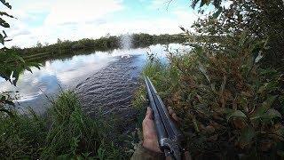 Лучшие выстрелы на охоте по утке в республике Коми