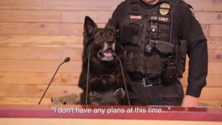 Olympia K9 Melnic announces his retirement