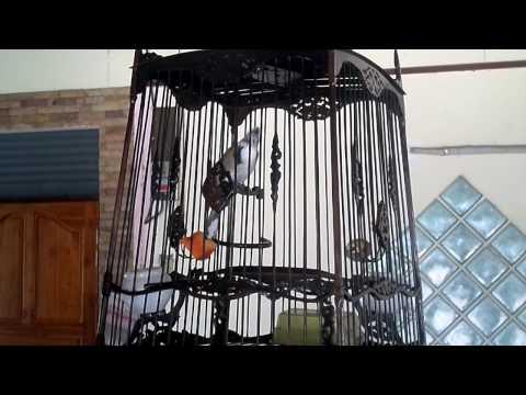 นกหัวอินทรี