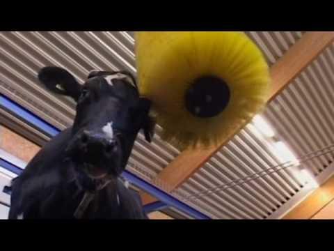 swinging-cow-brush-scb-delaval