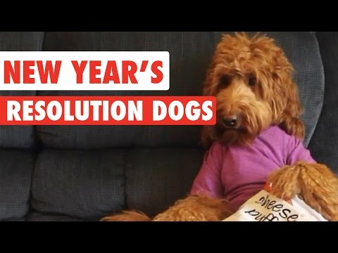 New Year's Resolution Dogs Video Compilation 2017