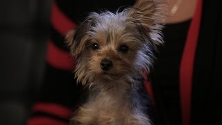 Puppy Bowl Adoption Tails: Enzo | Puppy Bowl Xi