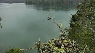 Audubon Osprey Nest Cam 05-20-2018 10:27:57 - 11:27:58 thumbnail
