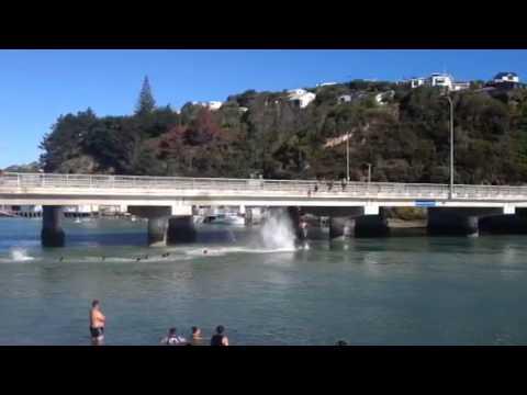 Bridge Jumping into Porirua Harbour