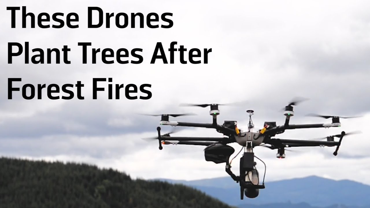 These Drones Plant Trees After Forest Fires