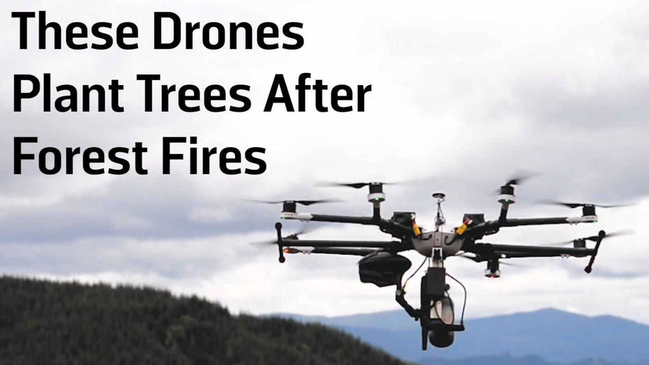 Drones Technology Takes On Reforestation | UAV Expert News