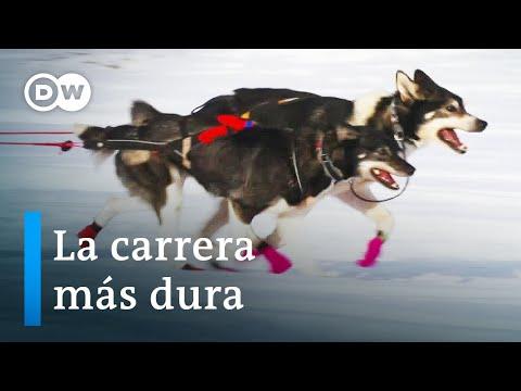 Los Trineos de perros en Noruega