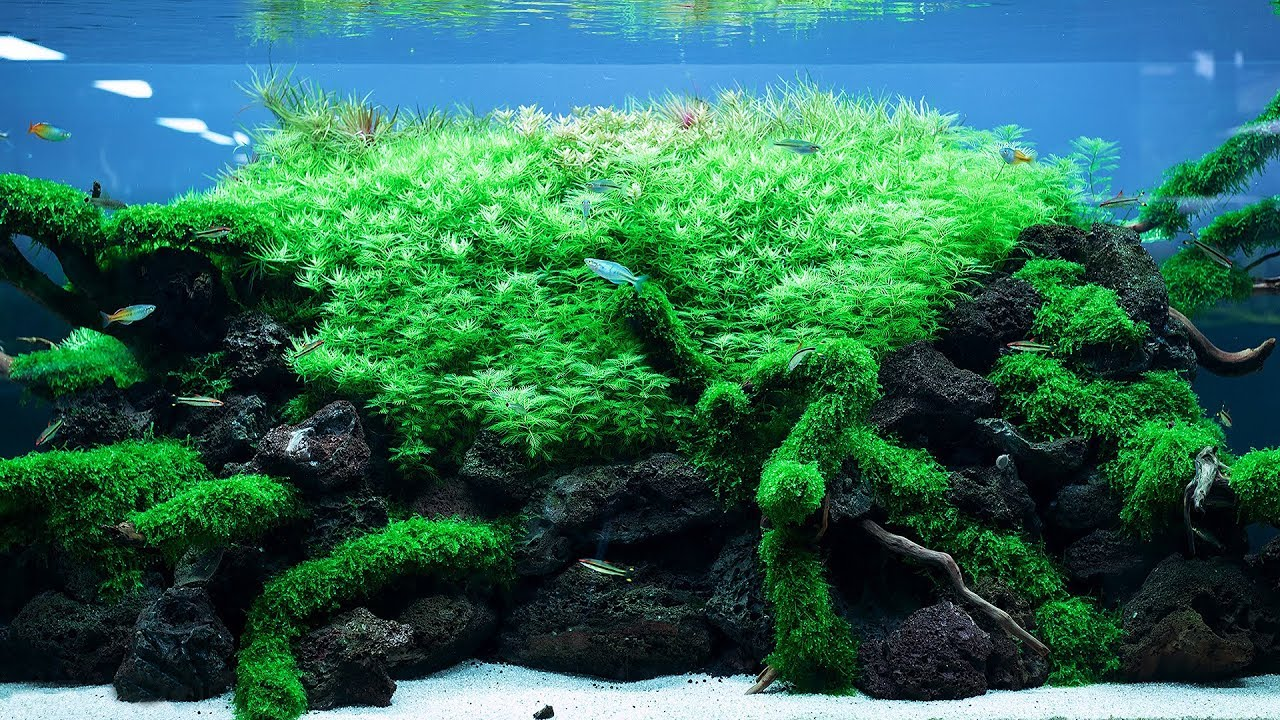 Takashi Amano Aquascape - Aquascape Ideas