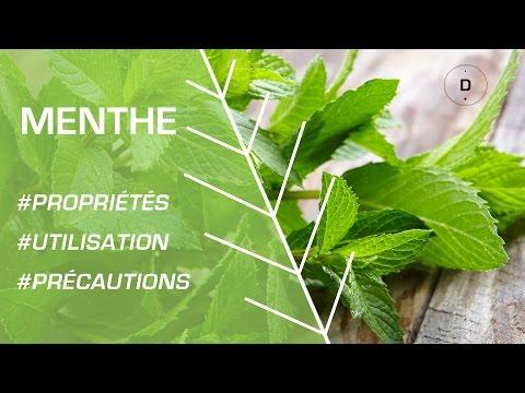 Comment utiliser la menthe poivrée et la menthe verte ?