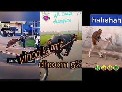 Download zili funy video//new zili funy viral video*/comedy videos new//funy video/new funny videos