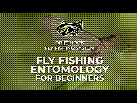 Fly Fishing Entomology For Beginners
